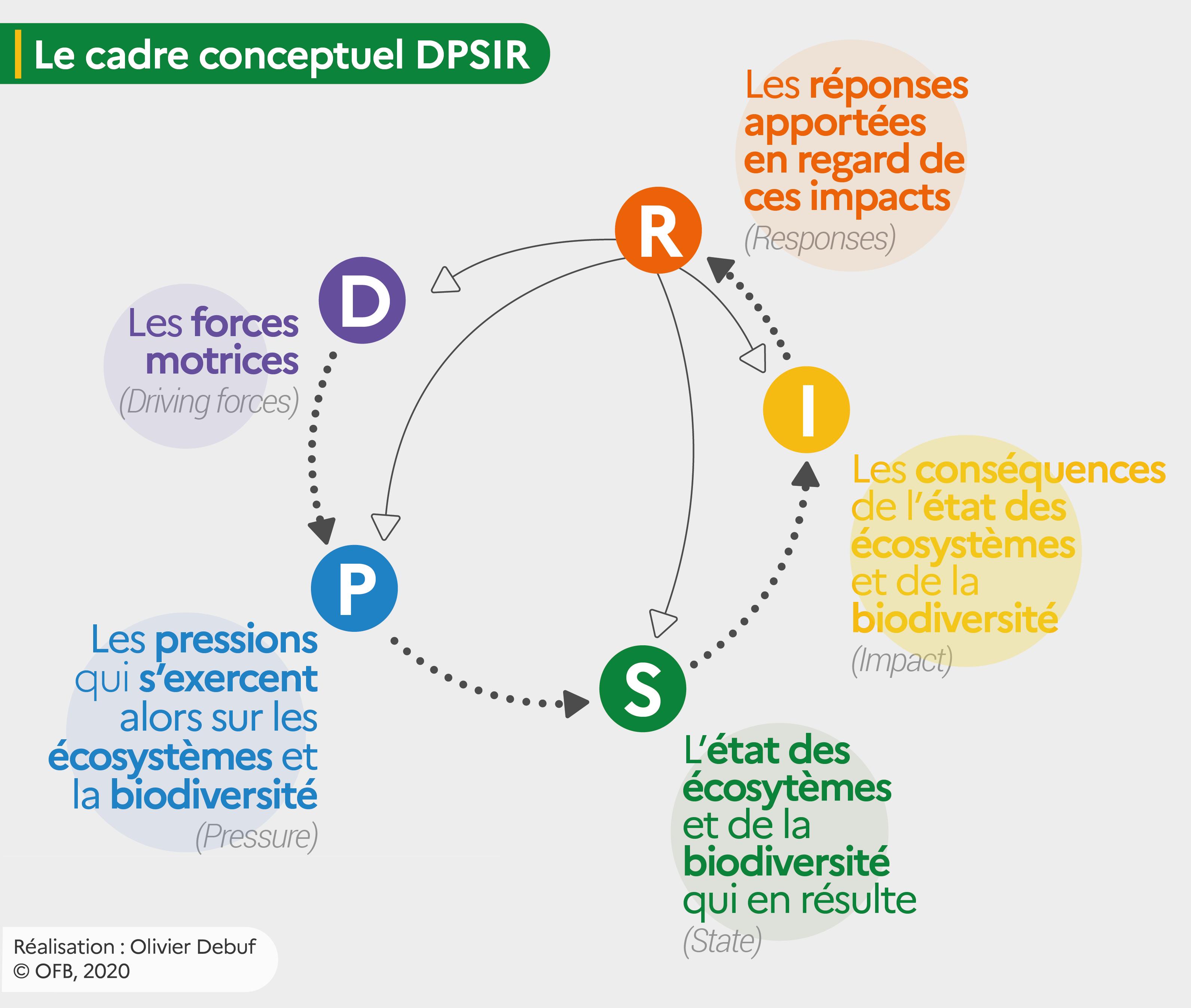 Représentation du cadre conceptuel DPSIR