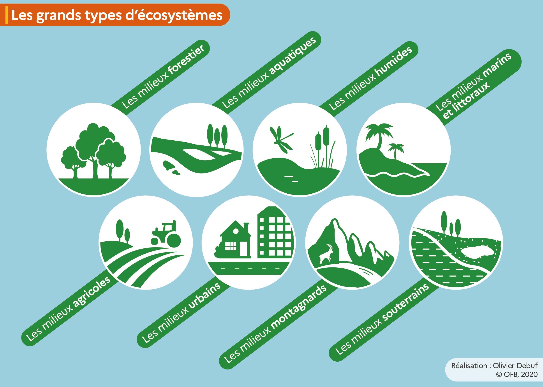 Infographie sur les grands types d'écosystèmes