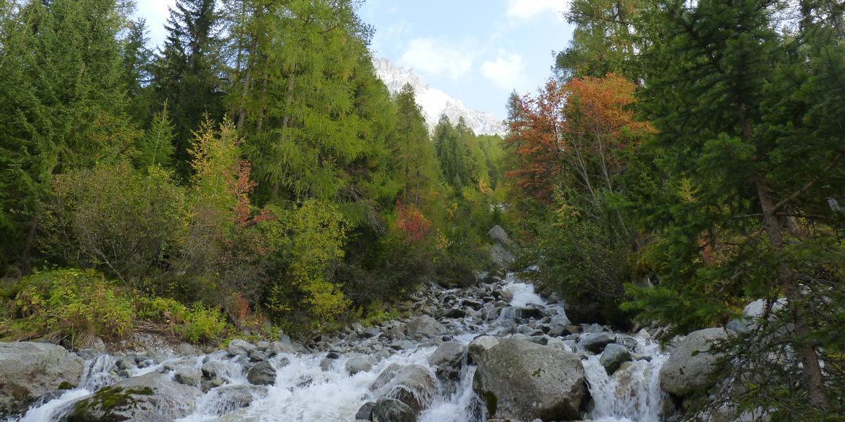 Forêt en Haute-Savoie