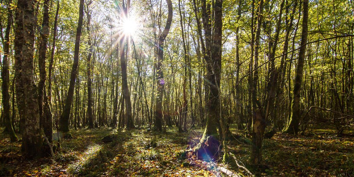 Forêt de feuillus dans le Cher
