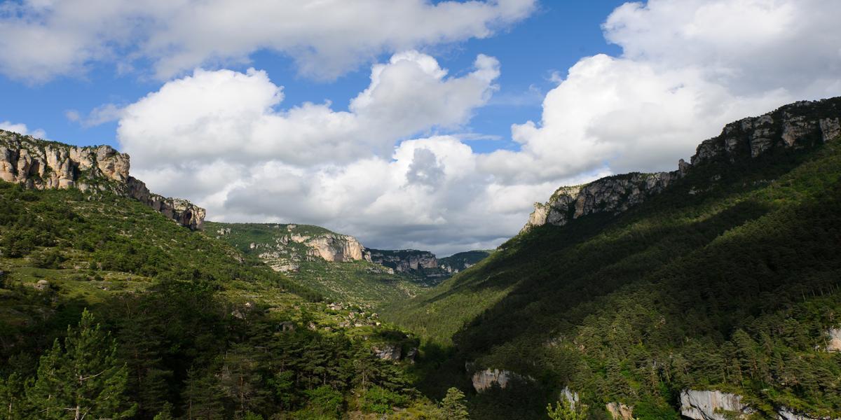 Parc national des Cévennes (Gorges de la Jonte, Lozère)