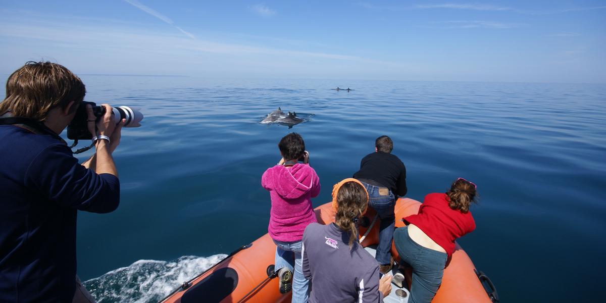 Photo-identification des grands dauphins (Tursiops truncatus) par le Groupe d'Etude des Cétacés du Cotentin (Golfe normand-breton)