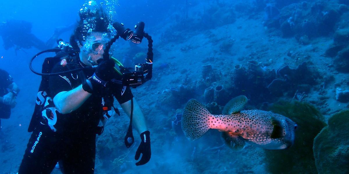 Plongée sous-marine à Pointe Lamare (Martinique)