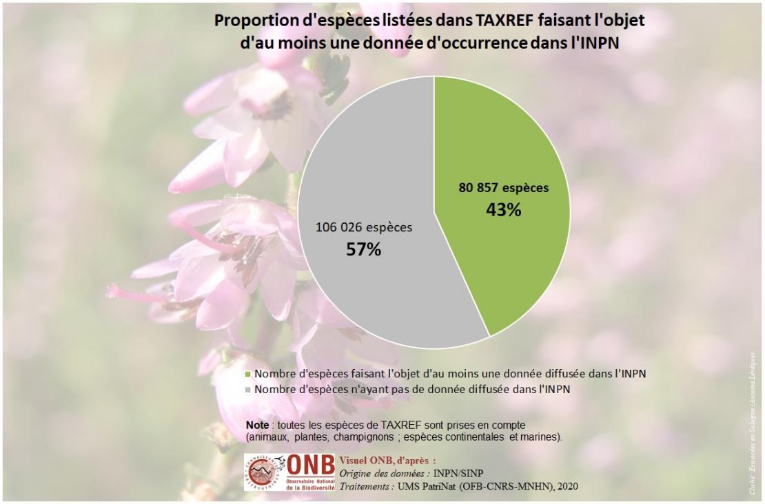 Historique de la proportion d'espèces valides listées dans TAXREF faisant l'objet d'au moins une donnée d'occurrence dans l'INPN, dernièer valeur en 2020