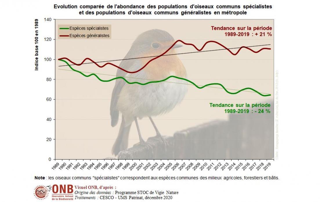 Évolution comparée de l'abondance des populations d'oiseaux communs spécialistes et des populations d'oiseaux communs généralistes en métropole, version 2020