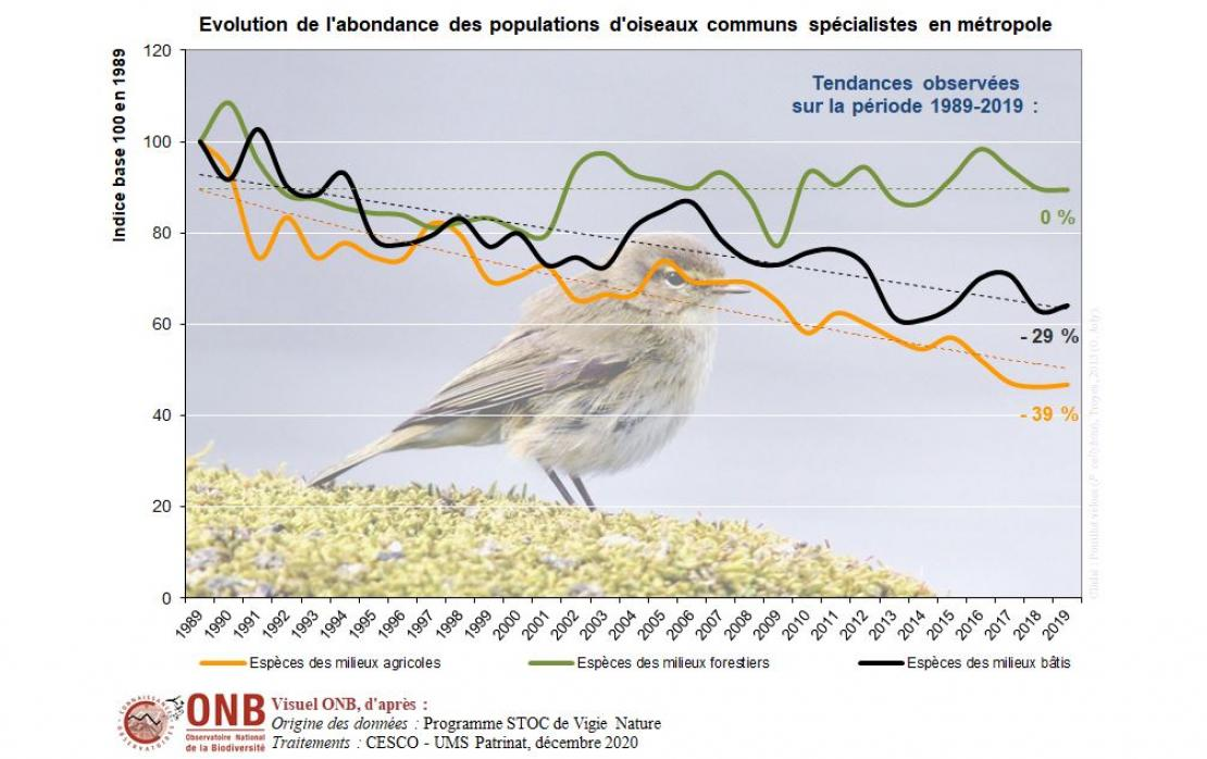 Évolution de l'abondance des oiseaux communs spécialistes métropolitains en fonction de leur milieu d'habitat, en indice base 100 en 1989, version 2020