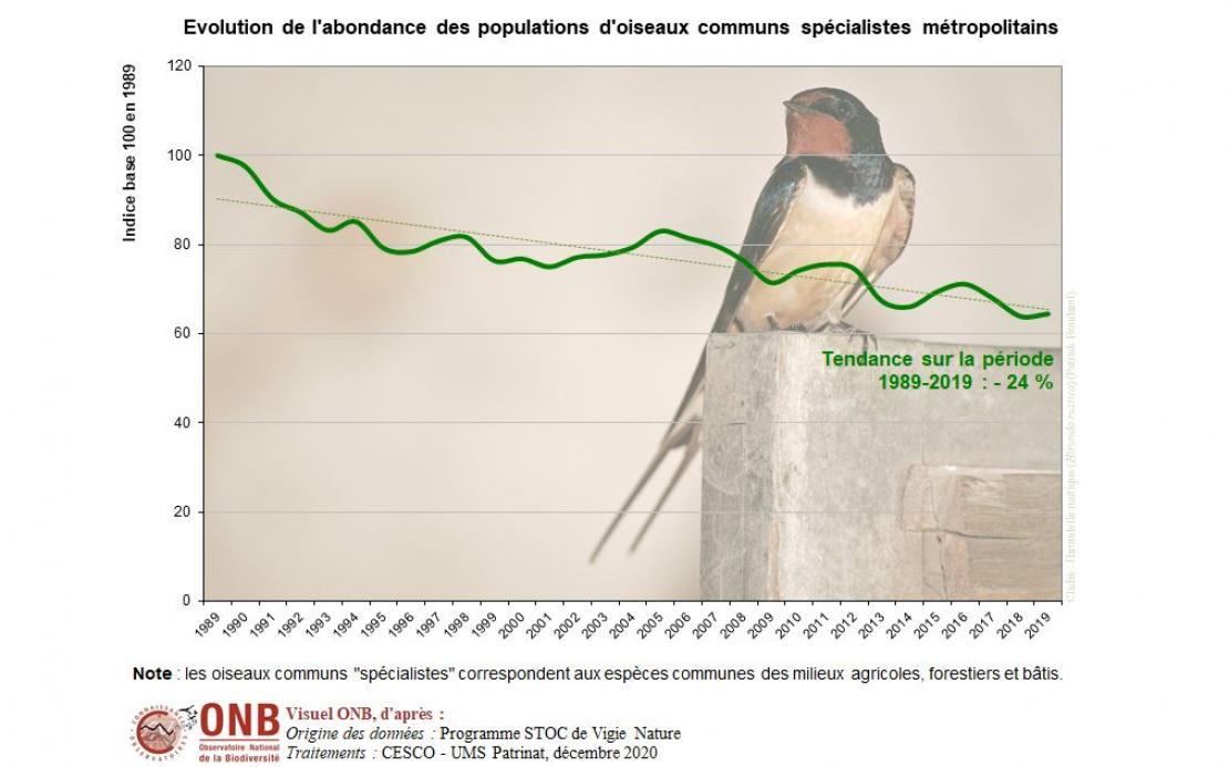 Évolution de l'abondance des oiseaux communs spécialistes métropolitains en indice base 100 en 1989, version 2020